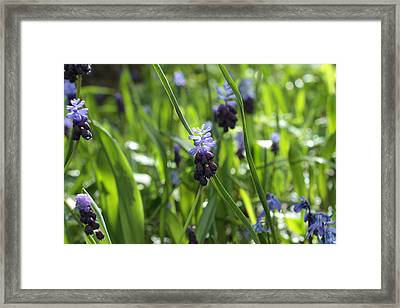 In The Wild Framed Print by Connie Handscomb