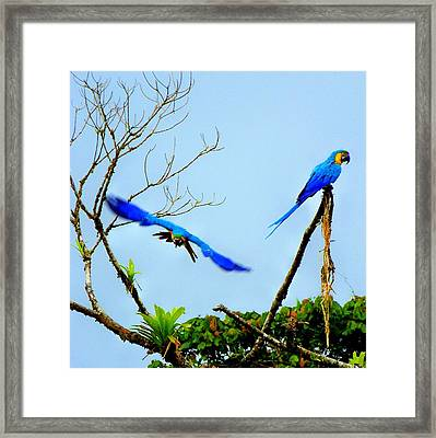 In The Wild Framed Print by Karen Wiles