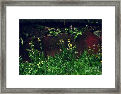 Framed Print featuring the photograph In The Wild by Kristine Nora