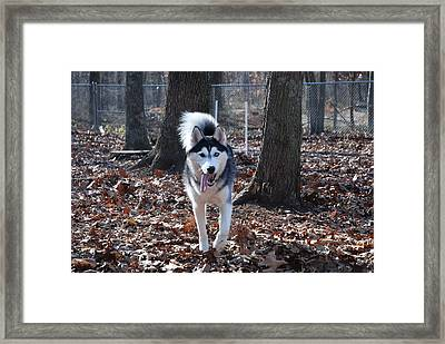 In The Wind Framed Print by Clay Peters Photography