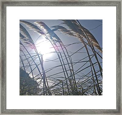 In The Wind Framed Print by Jean Booth