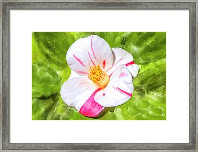 Framed Print featuring the mixed media In The Winter Garden - Camellia Blossom by Mark Tisdale