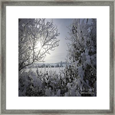 In The Winter Time Framed Print by Angel  Tarantella
