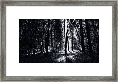 In The Woods 6 Framed Print