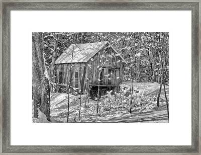 In The Woods Bw Framed Print