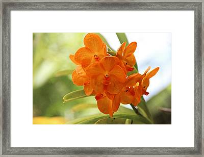 Framed Print featuring the photograph In This World by Michiale Schneider