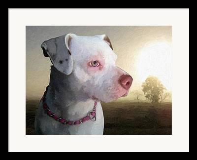 Staffordshire Bull Terrier Framed Prints