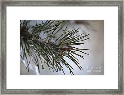 In Winter's Light Framed Print