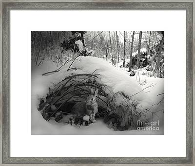 In Wonderland Framed Print by Jan Piller