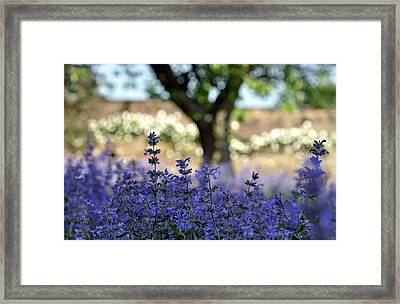 Framed Print featuring the photograph In Yorkshire 2 by Dubi Roman