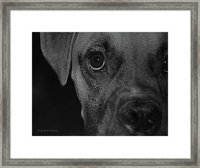 In Your Face Framed Print by DigiArt Diaries by Vicky B Fuller
