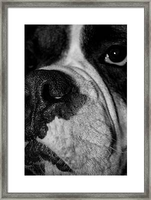 In Your Face II Framed Print