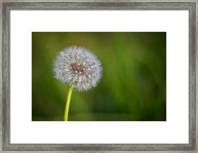 Framed Print featuring the photograph In Your Own Time by Tim Nichols