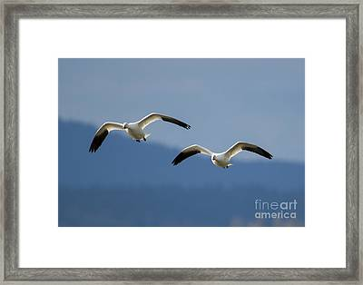 Inbound Framed Print by Mike Dawson