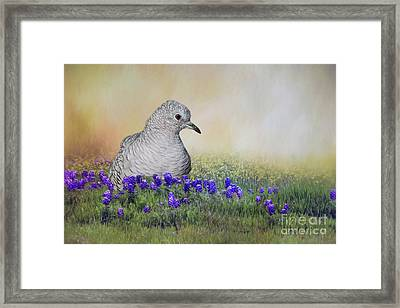 Framed Print featuring the photograph Inca Dove  by Bonnie Barry
