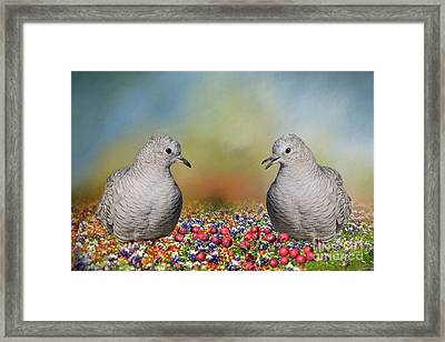 Framed Print featuring the photograph Inca Doves by Bonnie Barry