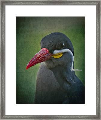 Inca Tern _ 1a Framed Print