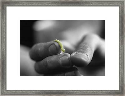 Inchworm Framed Print