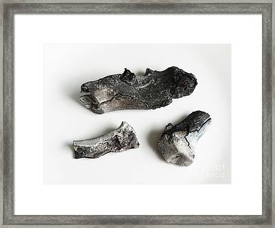 Incinerated Pork Hock Bones Framed Print