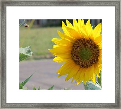 Incoming Bee Framed Print