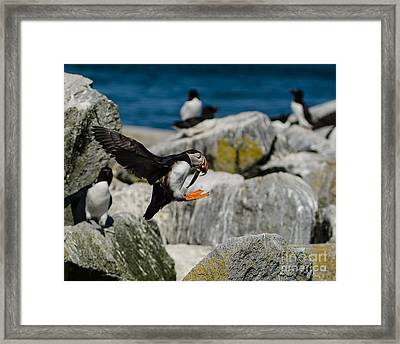Incoming Framed Print by Paul Noble