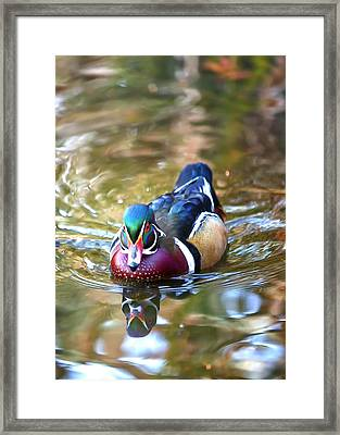 Incoming Woody Framed Print by Bill Tiepelman