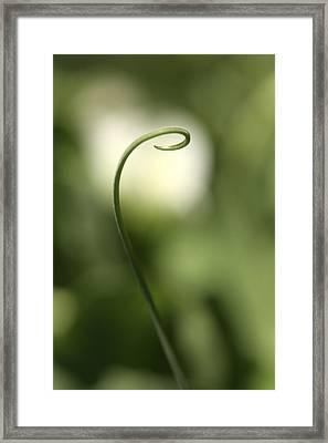 Indecision Framed Print