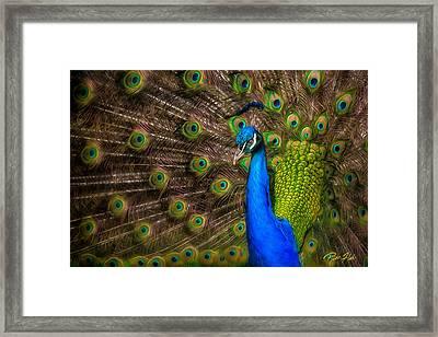 India Blue Framed Print
