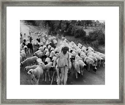India: Shepherd, 1966 Framed Print