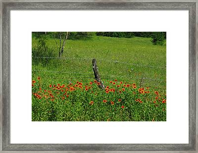 Indian Blanket Fence Framed Print by Robyn Stacey