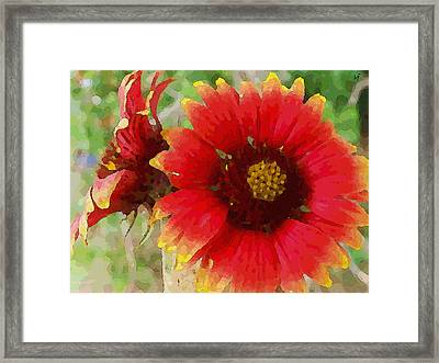 Indian Blanket Flowers Framed Print