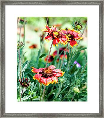 Indian Blanket Framed Print by Norman Johnson