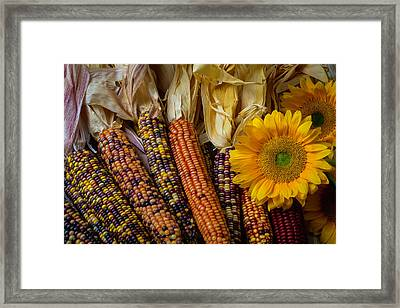 Indian Corn And Sunflowers Framed Print by Garry Gay
