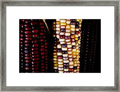 Indian Corn Framed Print by Colleen Kammerer