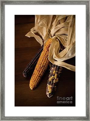 Indian Corn Harvest Framed Print by Taylor Martinsen