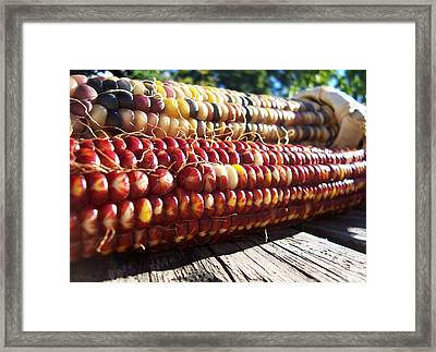 Framed Print featuring the photograph Indian Corn On The Cob by Shawna Rowe