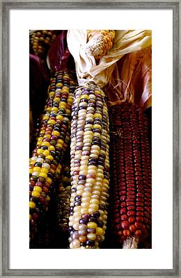 Indian Corn Framed Print by Sonja Anderson