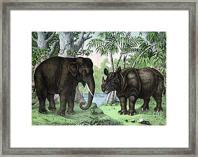 Indian Elephant And Rhinoceros Framed Print