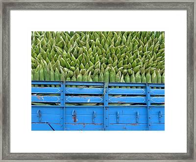 Indian Harvest Framed Print