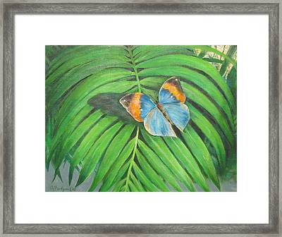 Indian Head Butterfly Framed Print by Oz Freedgood
