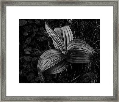 Framed Print featuring the photograph Indian Hellebore 2 by Trever Miller