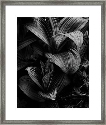 Framed Print featuring the photograph Indian Hellebore 4 by Trever Miller