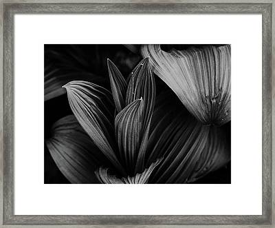 Framed Print featuring the photograph Indian Hellebore 5 by Trever Miller