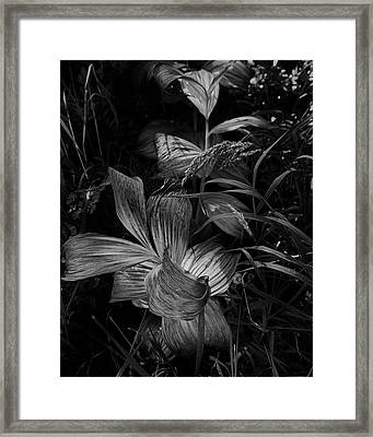 Framed Print featuring the photograph Indian Hellebore 6 by Trever Miller