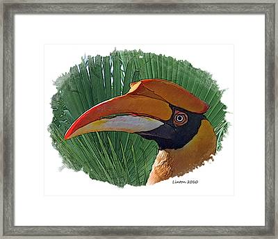 Indian Hornbill Framed Print by Larry Linton