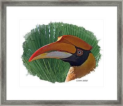 Indian Hornbill Framed Print