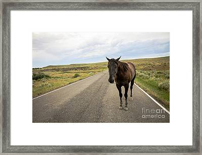 Framed Print featuring the photograph Indian Horse by Sandy Adams
