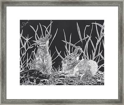 Indian Ink Rabbits Framed Print by Kevin F Heuman