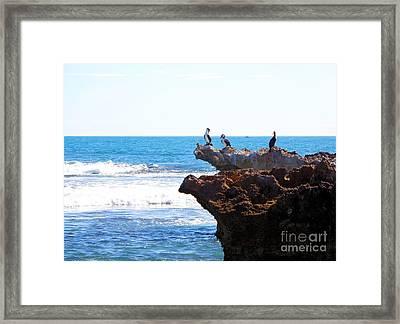 Indian Ocean Birds Resting On Rocks Framed Print