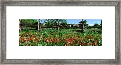 Indian Paint Brush Flowers, Lbj Framed Print by Panoramic Images